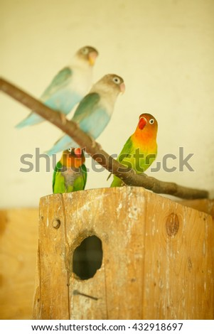 Bright exotic parrots sit on a block in cage - stock photo