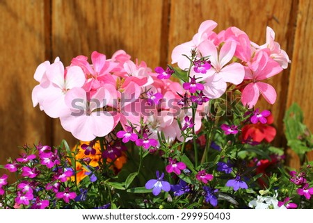 Bright Floribunda of Summer Flowers - stock photo