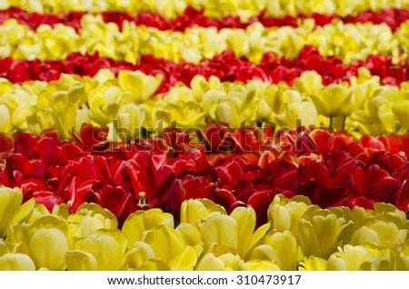 Bright Flower Background - stock photo