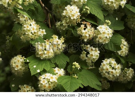 Bright flowers blossoming in the summer garden - stock photo