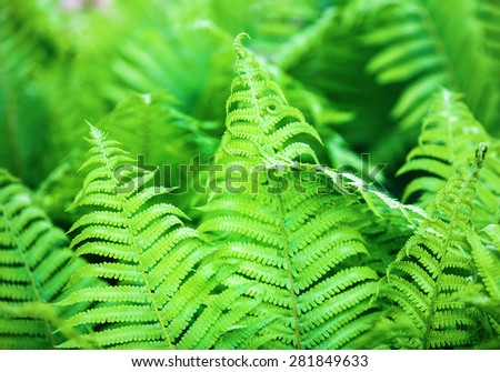 Bright fresh green fern leaves. Shallow depth of field. Selective focus. - stock photo