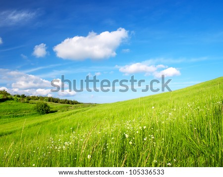 Bright grass and blue sky. Spring composition - stock photo