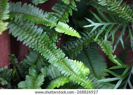 Bright green fern fronds - stock photo