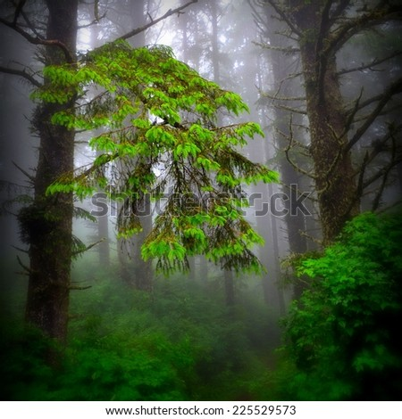 Bright green foliage is seen in front of tree trunks and mist. - stock photo