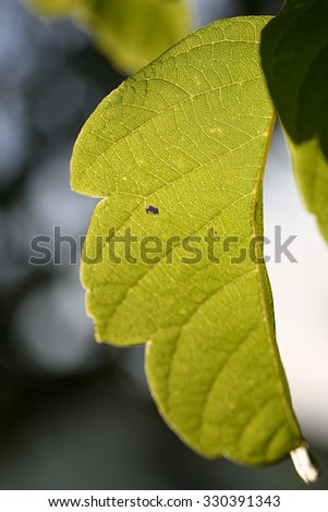bright green leaf isolated outdoor - stock photo
