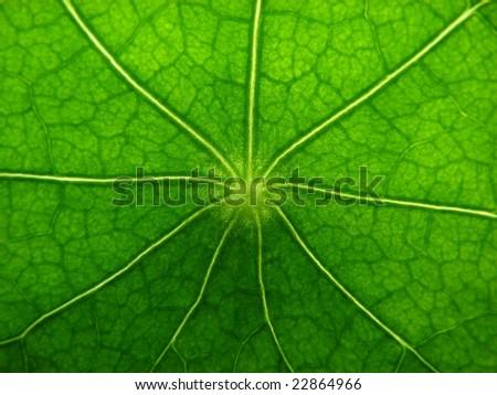 bright green leave - stock photo