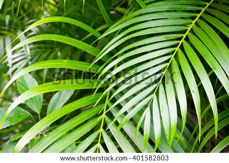 Bright green palm tree leaves, tropical nature background photo - stock photo