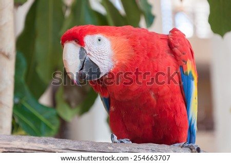 Bright multi-coloured red Macaw Parrot:  Close-up. Mexico - stock photo