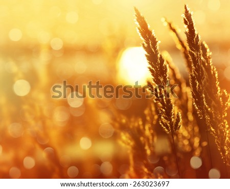 Bright natural background with a reed at sunrise - stock photo