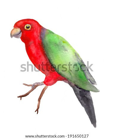 Bright parrot - exotic colorful red-green bird. Watercolor drawing - stock photo