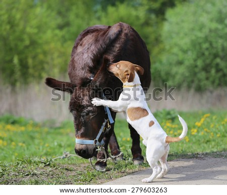 bright picture amusing donkey and dog sunny day  - stock photo