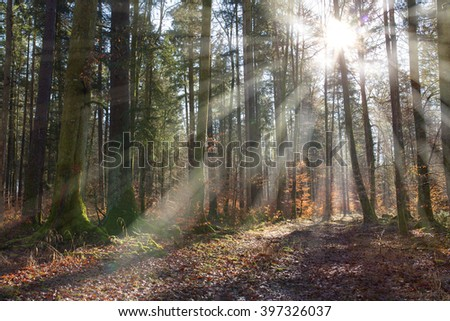 Bright picture with sunbeams in the forest.The Sun shine through the trees. - stock photo
