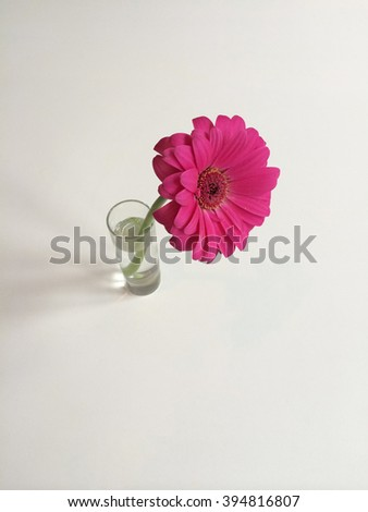 Bright pink daisy in a vase - stock photo