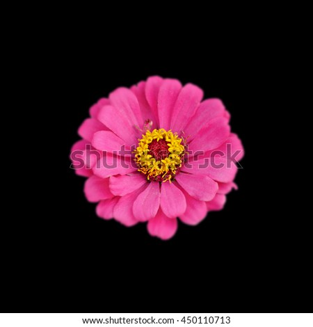 Bright pink flower isolated on black background - stock photo
