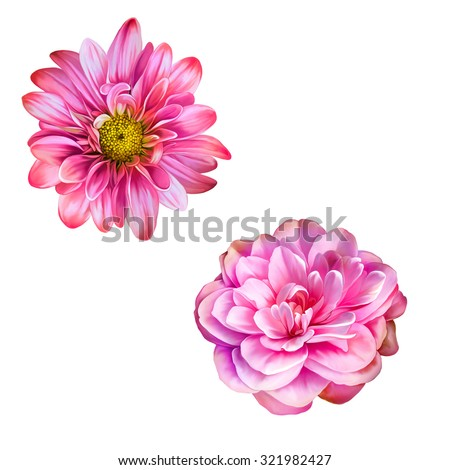Bright pink Mona Lisa flower, Spring flower.Isolated on white background - stock photo