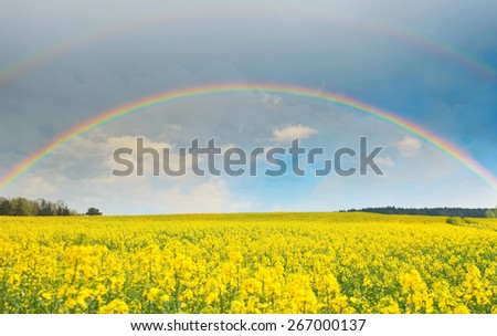 Bright rainbow in the sky with clouds above the yellow rapeseed field - stock photo