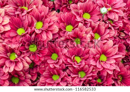 Bright red flowers - stock photo