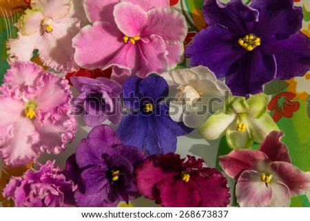 Bright spring floral background of colorful flowers violets - stock photo