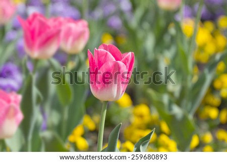 Bright spring flowers - stock photo