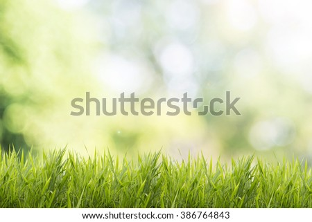 Bright spring grass field with sunlight bokeh background - stock photo