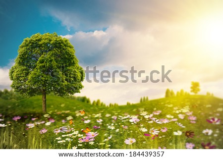 Bright summer afternoon on the meadow. Natural backgrounds  - stock photo