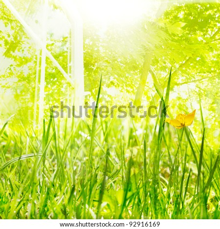 Bright sun, new growth and open windows of Spring - stock photo