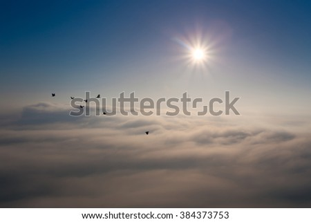 Bright sun over the dense clouds/fog above the ground. Industrial pipes, sticking out.  Flock of birds flying over. - stock photo