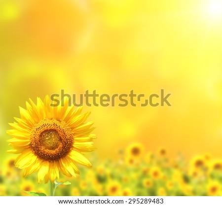 Bright sunflowers on yellow background - stock photo