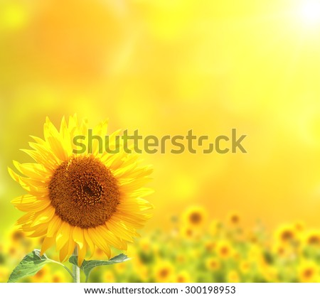 Bright sunflowers on yellow background - stock photo