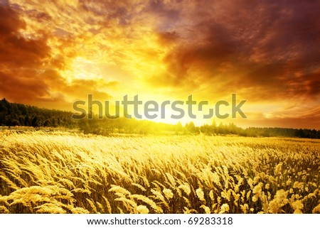 Bright sunset and field of yellow grass. - stock photo