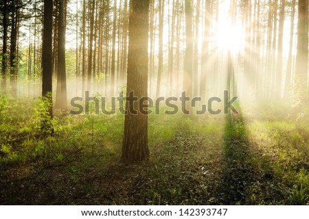 bright sunset in the woods - stock photo