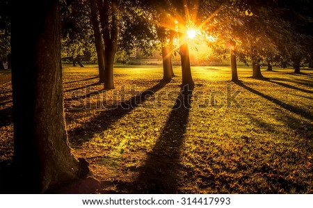 Bright Sunset with Sun Rays in Forest - stock photo
