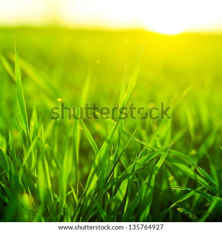 Bright vibrant green grass close-up - stock photo