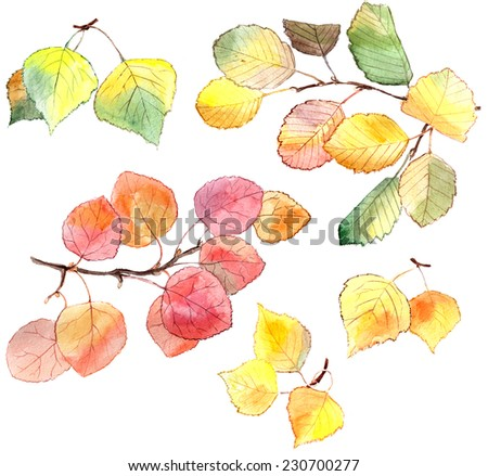 Bright watercolor painting of an autumn branches of alder tree, birch and aspen. Isolated on white background. - stock photo