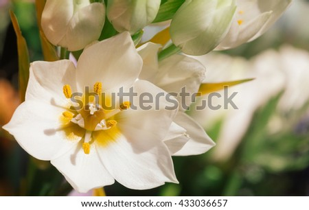 Bright white and yellow flower blooming in warm sun light - stock photo