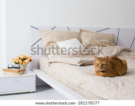 Bright white bedroom interior, cat sitting on a bed with beige linen, flowers on a bedside table, closeup - stock photo