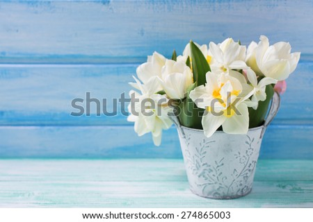 Bright white daffodils and tulips  flowers, candle on turquoise  painted wooden planks against blue wall. Selective focus. Place for text. Square image. - stock photo