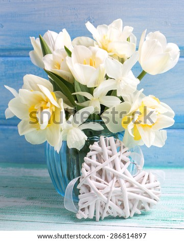 Bright white daffodils and tulips  flowers in blue vase and white heart  on turquoise  painted wooden planks against blue wall. Selective focus. - stock photo