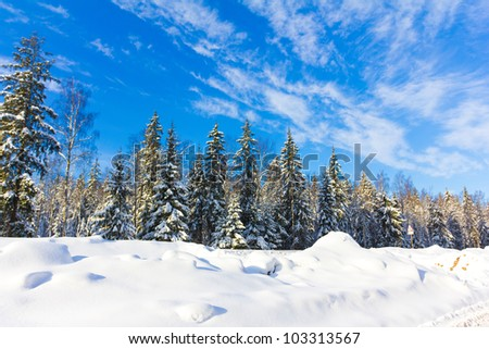 Bright Winter Reigns - stock photo