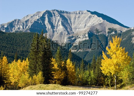 Bright yeallow and green trees with rockies on background - stock photo