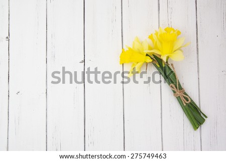 Bright yellow daffodils on a white wooden background. Spring decor for greeting cards  - stock photo