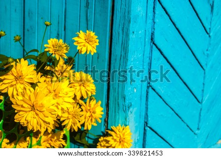 Bright yellow flowers on blue wooden background - stock photo