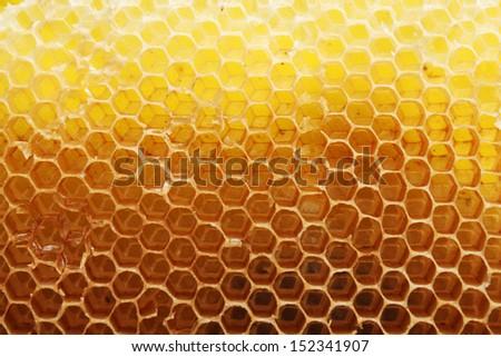 Bright yellow honeycomb - stock photo