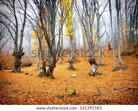 Bright yellow leaves in the fairy autumn forest - stock photo