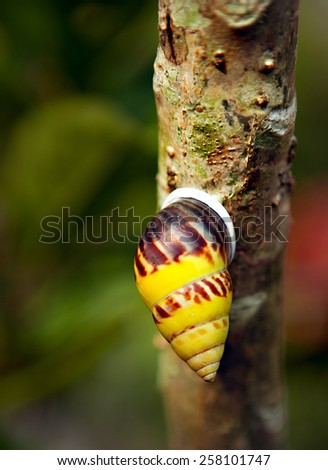 Bright yellow Snail - stock photo