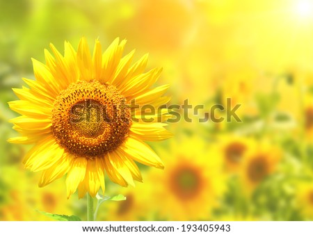 Bright yellow sunflowers and sun - stock photo