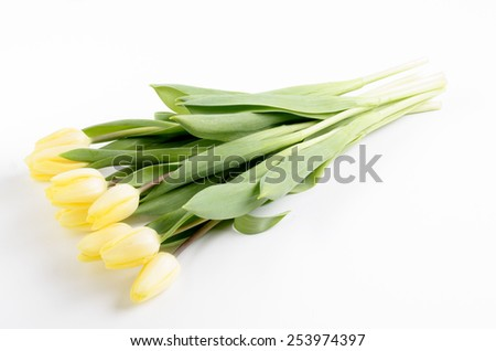 bright yellow tulips on a light background - stock photo