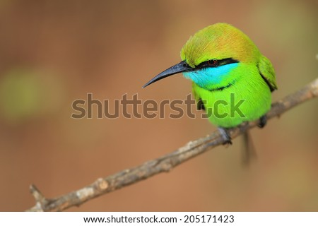 Brightly colored bird sitting on a branch - stock photo