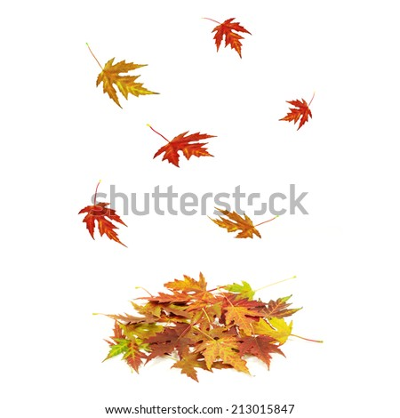 Brightly colored falling leaves isolated on white background - stock photo
