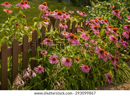 Brightly colored summer wild flowers in garden - stock photo
